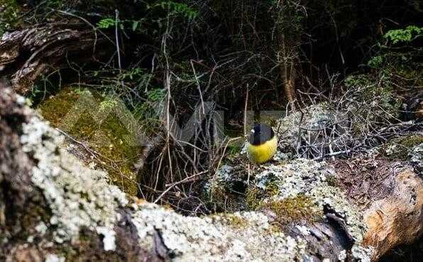Bird spotted on the Routeburn Track
