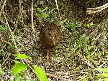 Weka along the track front view
