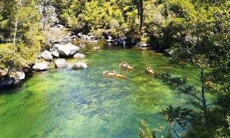 seen through the trees abel tasman coastal track