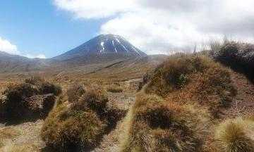 The track on the way to the Waihohonu hut and campsite